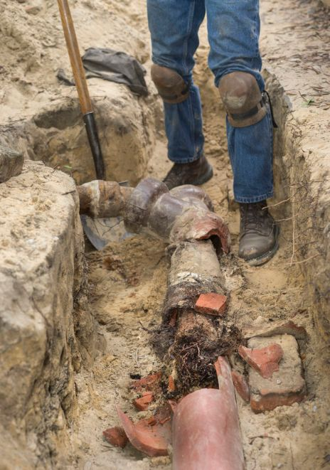 What to Do if You Have Tree Roots in Your Pipes